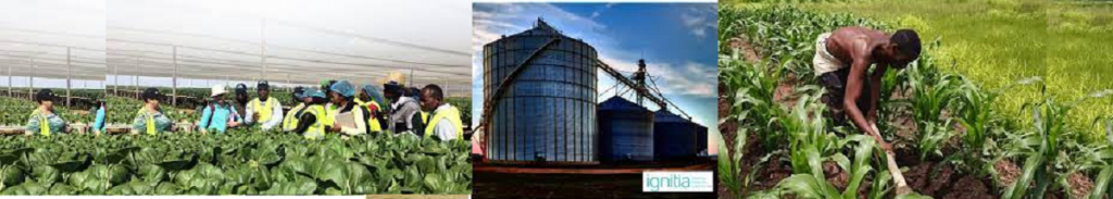Agricultural Businesses: How to make a simple business plan